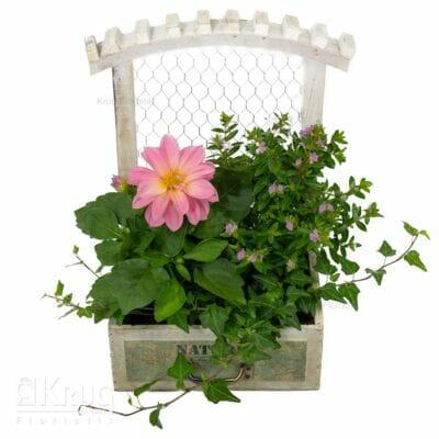 Holzgefäß mit Spalier und blühenden Garten-Pflanzen