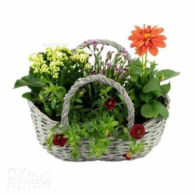 bunte sommerliche Pflanzen in Korbtasche