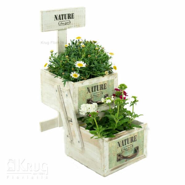 Pflanzen in Holz-Schublade mit Nature Aufschrift